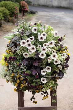 Container Flowers, Container Plants, Container Gardening, Patio Planters, Flower Planters, Green Flowers, Summer Flowers, Window Box Plants, Floating Garden