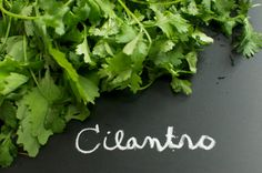 Organic Cilantro Coriander Herb Seeds by cubits on Etsy, $3.75