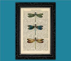 Dragonflies Vintage Colorful Art Print - Drangonfly Poster Dorm Room Print Gift Print Wall Decor Poster Dictionary Print Animal Art Print
