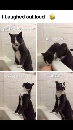 Awesome cat! Lol