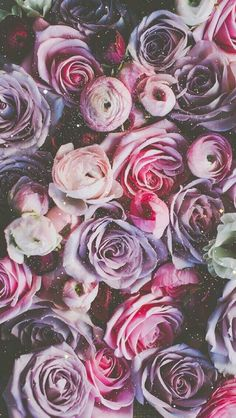 || Pink and Purple Winter Roses and Ranunculus  ||