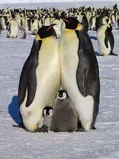 Penguin Family.