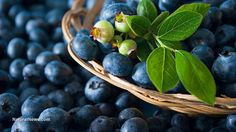 Blueberry phenol pterostilbene reduces body fat, could lower diabetes risk