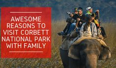 Various reasons why you should visit Jim Corbett National Park this winter with family. #CorbettNationalPark #WildLife