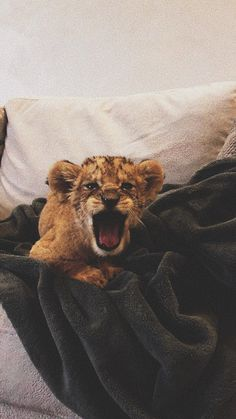 Cute Wild Animals, Baby Animals Pictures, Cute Little Animals, Cute Animal Pictures, Cute Funny Animals, Cute Cats, Cute Cat Wallpaper, Animal Wallpaper, Majestic Animals