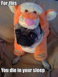 for this, you die in your sleep. poor hilarious pug