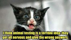 I think animal testing is a terrible idea! - Funny Cat