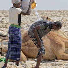 Les Afars,travailleurs des decoupages de sels qui se refroidissent a cause de la chaleur,dans les environs de Dalol
