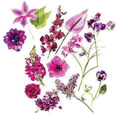 Our favorite flowers from the bright magenta to deep purple spectrum.
