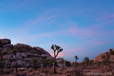 9 Things to Do in Joshua Tree National Park