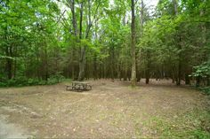 Sibbald Point Provincial Park, East Campground, Camping in Ontario Parks Ontario Parks, Outdoor Furniture, Outdoor Decor, Camping, Plants, Campsite, Plant, Campers, Backyard Furniture