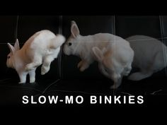 Rabbit binkies in slow motion! Watch for the butt wiggle in the middle :). Rabbit Binky, Binky Bunny, Bunny Rabbit, Cute Bunny Pictures, Animal Pictures, Bunny Pics, Cute Little Animals, Baby Animals, Bunny Rescue