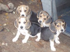 future hunting dogs