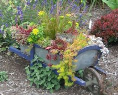 What to do with an old wheelbarrow?  Fill it with succulents.