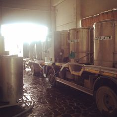 The daily production of cheese begins with the arrival of fresh whole milk.  Good morning from Parmigiano Reggiano country!