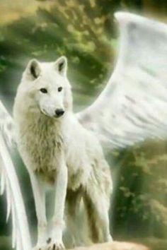 Wolf angel