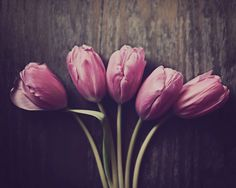 Tulip Photograph, Flower Photography, Still Life. Pink, Purple, Minimal, Vintage Tones, Kitchen Decor, Elegant, Romantic, Fine Art Print by ellemoss on Etsy https://www.etsy.com/listing/222017994/tulip-photograph-flower-photography