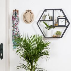 Petunia Pickle Bottom Dreaming in Dax Round Wood Shelf Display Shelves, Wall Shelves, Shelf, Plank Hold, Solid Wood Shelves, Wall Installation, Geometric Lines, Wall Storage, Wood And Metal
