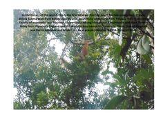 #ClippedOnIssuu from Take picture a third time orangutan south kalimantan by shinta sukmawati