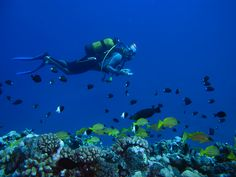 Wulfy Diving - est de faire découvrir et partager ce merveilleux monde sous-marin de l'île de la Réunion au cours d'un baptême de plongée ou d'un autre plaisir partagé et de vous amener dans cette autre dimension qu'est l'océan.. L'apensenteur en 3D est à portée de votre main !