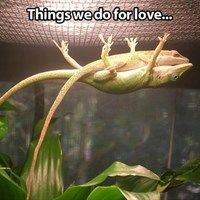 Anoles are such cute lizards =)