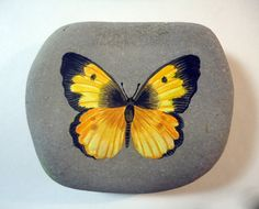 Original realistic yellow and black butterfly acrylic miniature painting on pacific ocean beach rock.