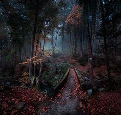 35PHOTO - Емил Рашковски - Enchanted forest
