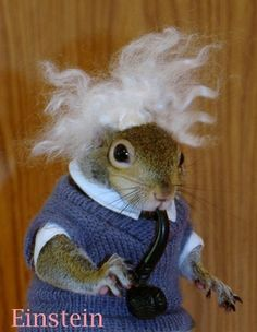 "i googled ""most photographed supermodel"" and the website for ""sugar bush squirrel"" was the top hit."