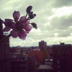 Flor y ciudad