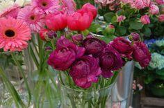 Ranúnculos en color morado #ranúnculos #moonflowerartefloral