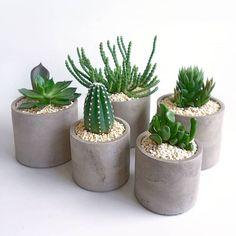 Fake Plants Decor, Small Plants, Plant Decor, Cacti And Succulents, Planting Succulents, Planting Flowers, Plantas Indoor, Beton Diy, Decoration Plante