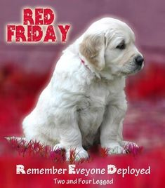 Patriotic Quotes, Remember Everyone Deployed, Red Friday, Military Quotes, Support Our Troops, Army Life, American Soldiers, God Bless America, Service Dogs