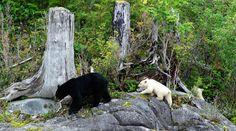 Stop Bear Trophy Hunting