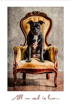 Auction item x 19 Poster of Xena the Pit Bull by TylerDog Photography'… Nanny Dog, Pit Bull Love, Family Dogs, Beautiful Dogs, I Love Dogs, Animal Photography, Pitbulls, Dogs Pitbull, Animal Rescue