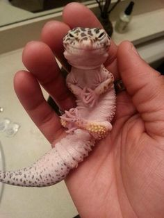 """""""Step One: Get Irradiated. Step Two: Destroy Tokyo."""" - schemes Dr. Leopard Gecko. #funny"""