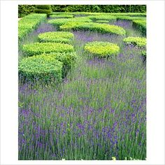 Box hedge and Lavender bed – Villandry, France | Andrea Jones