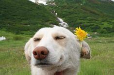 El niño de la flor | Las 100 fotos de perros más importantes de todos los tiempos