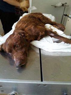 dierenarts://Vervolgens werd hij met spoed naar de dierenarts gebracht. Daar ontdekten ze dat zijn achterpoten waarschijnlijk verlamd waren als gevolg van een onbekend trauma