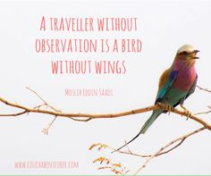A traveller without observation is a bird without wings. Moslih Eddin Saadi