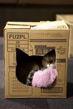 Bizzy don't need no damned fancy cat house. Box just fine. Must have blankie, though, love blankie. ~~ Houston Foodlovers Book Club