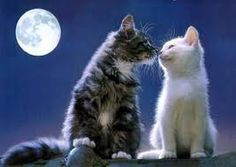 Under the moon on a bright clear sky night! Meeoowww!!  >^..^<