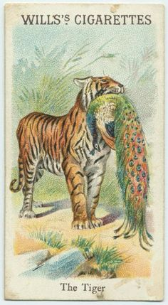 The Tiger. From New York Public Library Digital Collections. Nature Illustration, Fantasy Illustration, Dolphin Painting, Vintage Cigarette Ads, Boy Wall Art, Pet Tiger, Vintage Book Covers, Antique Paint, Old Paintings