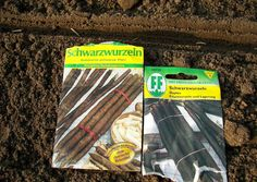 #Schwarzwurzel: Tiefgründiger guter Gartenboden wird benötigt. Der Anbau erfolgt in zweiter Tracht. Kein frisch gedüngter aber humusreicher Boden ist optimal. Um von der einjährigen Kultur zu profitieren, sollte die Schwarzwurzel auf bestem Boden, der zwei Spaten tief umgegraben wird, angebaut werden.  Düngung: Kein Dünger während der Kultur, das führt zur Verzweigung der Wurzeln!  Schwarzwurzel Saattüten und SaatfurcheSchwarzwurzel flach in Reihen aussäen.Die Aussaat: Sie soll in den…
