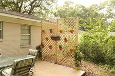 Lattice Wall for Backyard Privacy