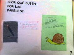 ▶ EXPOSICION ORAL PROYECTO CARACOLES - YouTube Education, Natural, Youtube, Animals, Science Projects, Snails, Vegetable Gardening, Trapper Keeper, Exhibitions