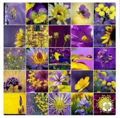 Yesterday's board was so unusual! A real challenge to match. But in the main (cough cough) everybody nailed it! Today let's do purple & yellow with lots of flowers x