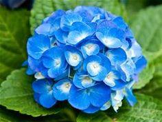 Flowers Bing Images Flower Lightslight Blue