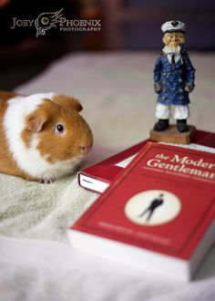 The Modern Guinea Pig   © 2014 Joey Phoenix Photography
