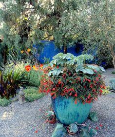 """danger garden: Another """"must see"""" HPSO Open Garden…"""