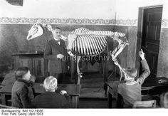 Eine Berufsschule für Jockey-Lehrlinge ! In Berlin-Hoppegarten [Hoppegarten bei Berlin] werden die angehenden Champions des Rennsports in einer Spezialschule auf ihren Beruf vorbereitet. Blick in eine Klasse der Berufsschule für Jockey-Lehrlinge mit einem Pferde-Skelett, an welchem die Jungens das Pferd in seinen Grundzügen kennenlernen.